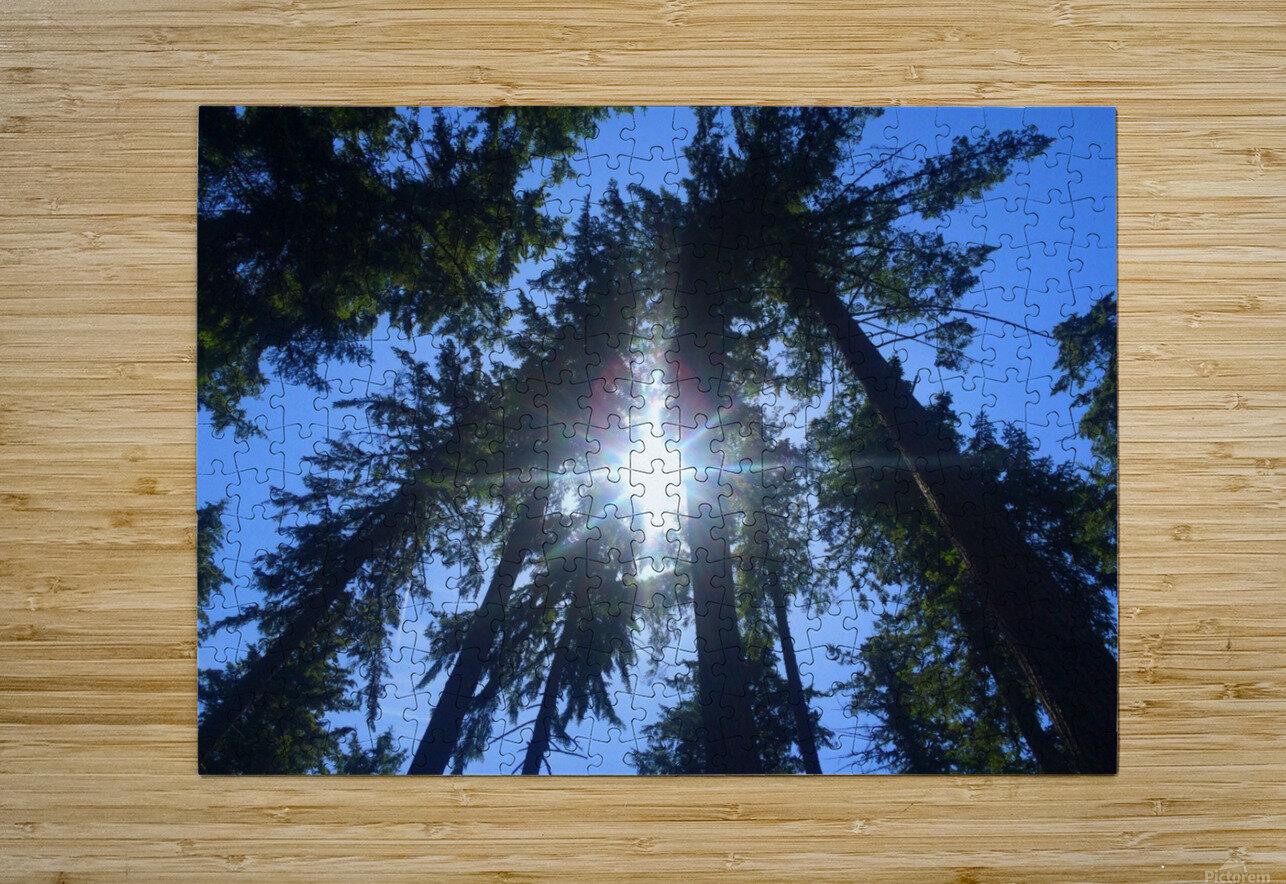 Weyerhaeuser Tree  HD Metal print with Floating Frame on Back