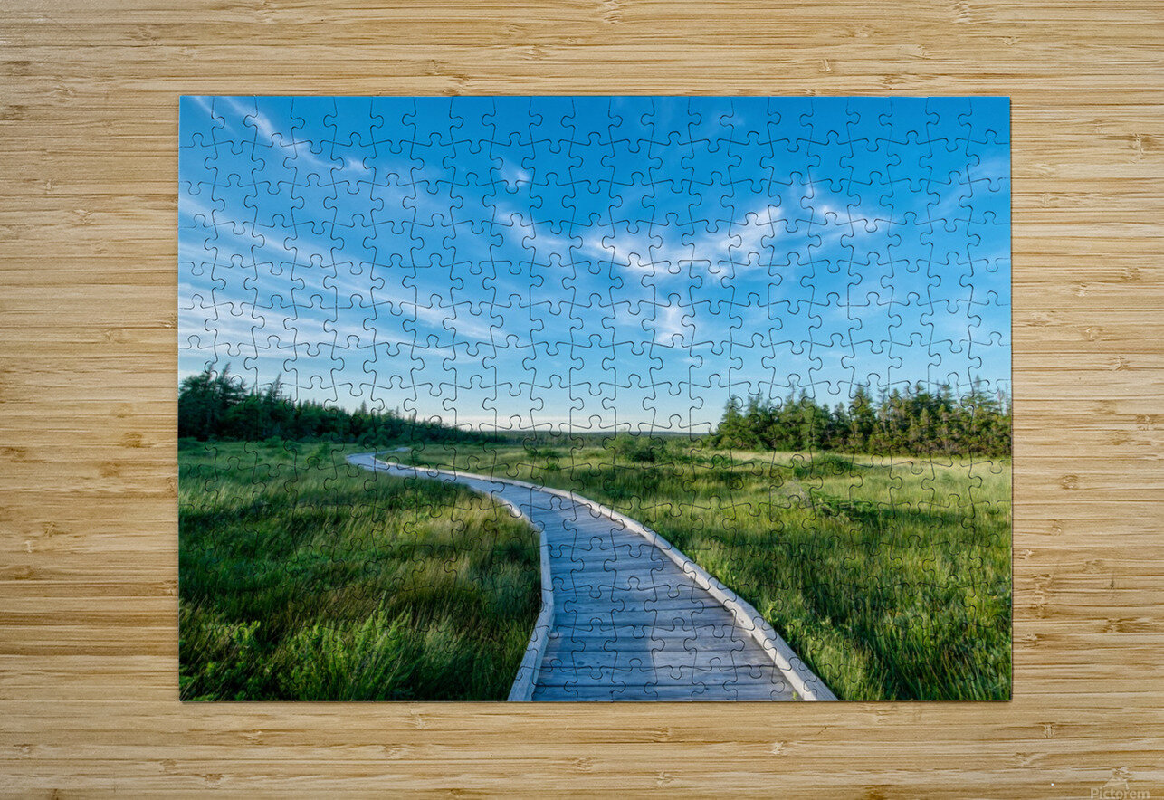 A walk at the Bog  HD Metal print with Floating Frame on Back