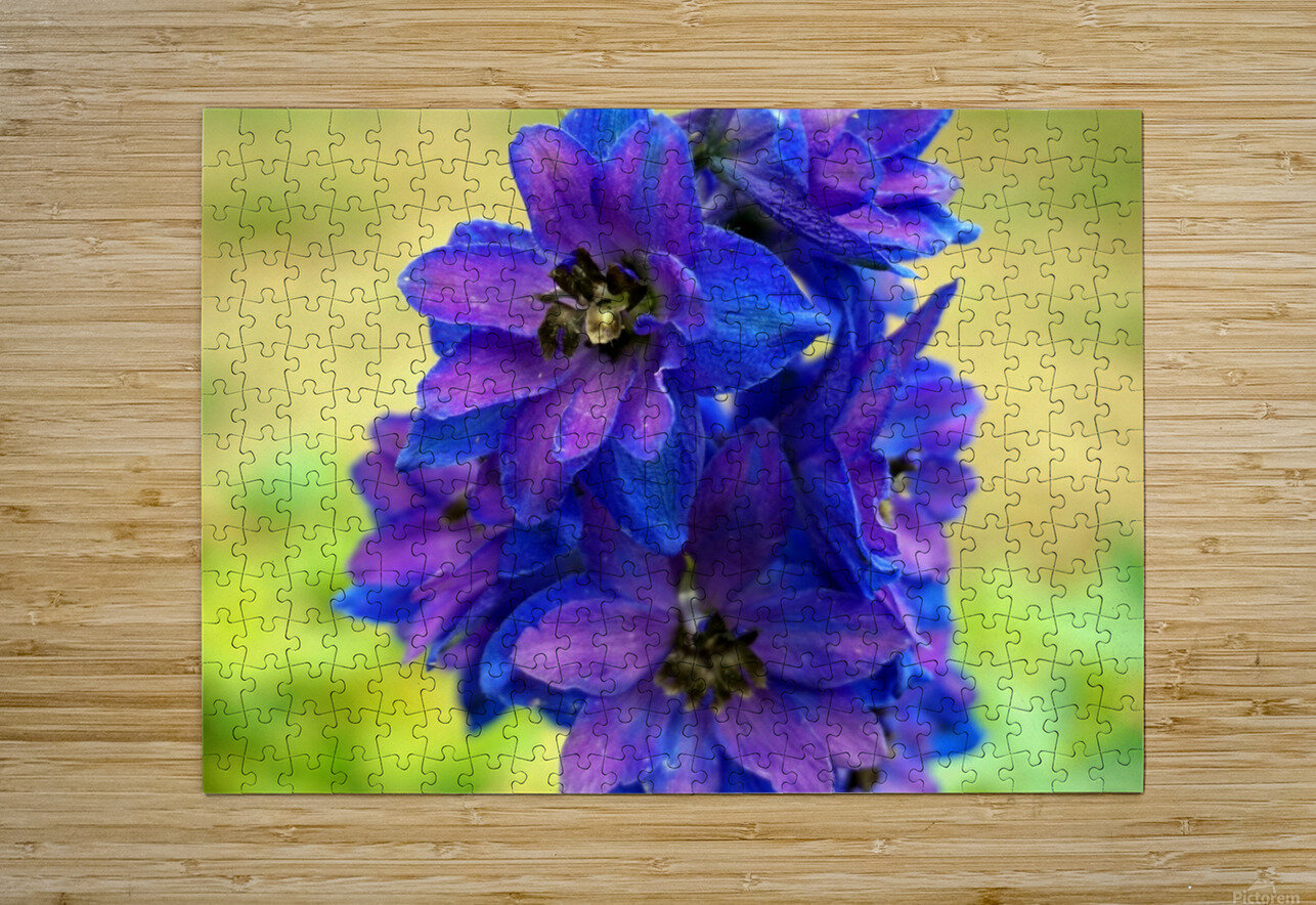 Purple And Blue  HD Metal print with Floating Frame on Back