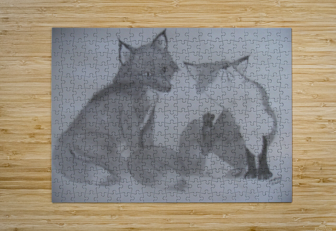 Fox Pair  HD Metal print with Floating Frame on Back