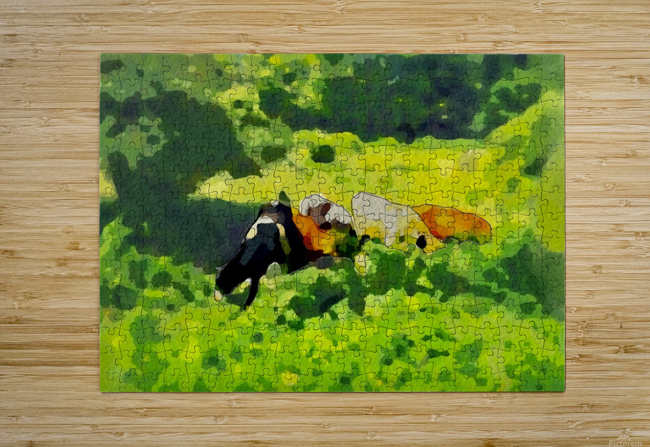 Cummington Cows  HD Metal print with Floating Frame on Back
