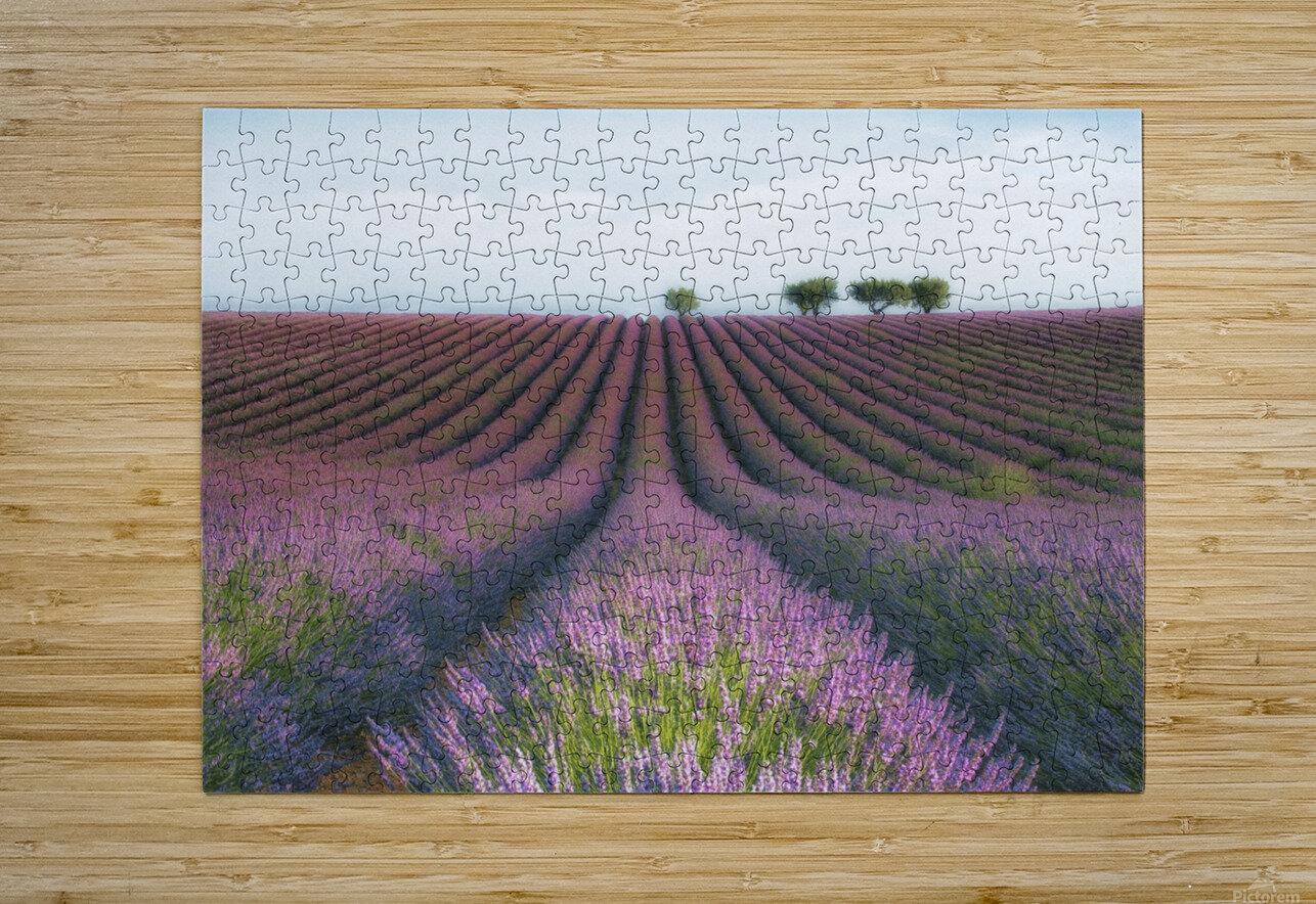 Velours de Lavender  HD Metal print with Floating Frame on Back