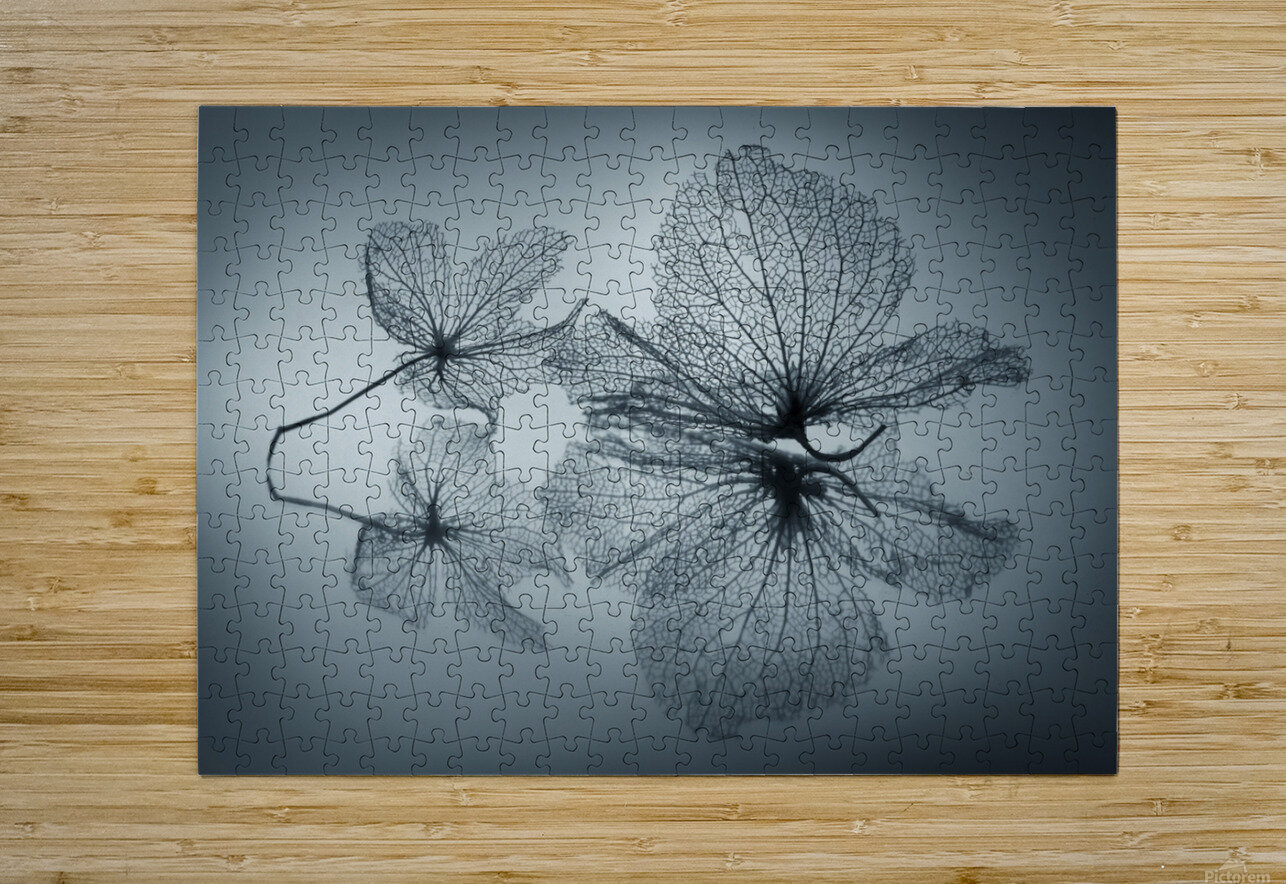 Ephemeral Beauty  HD Metal print with Floating Frame on Back
