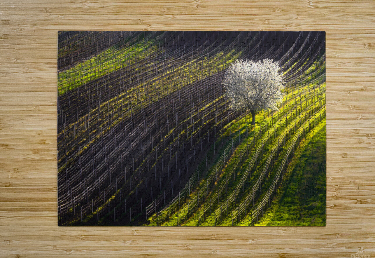 Strings of spring  HD Metal print with Floating Frame on Back