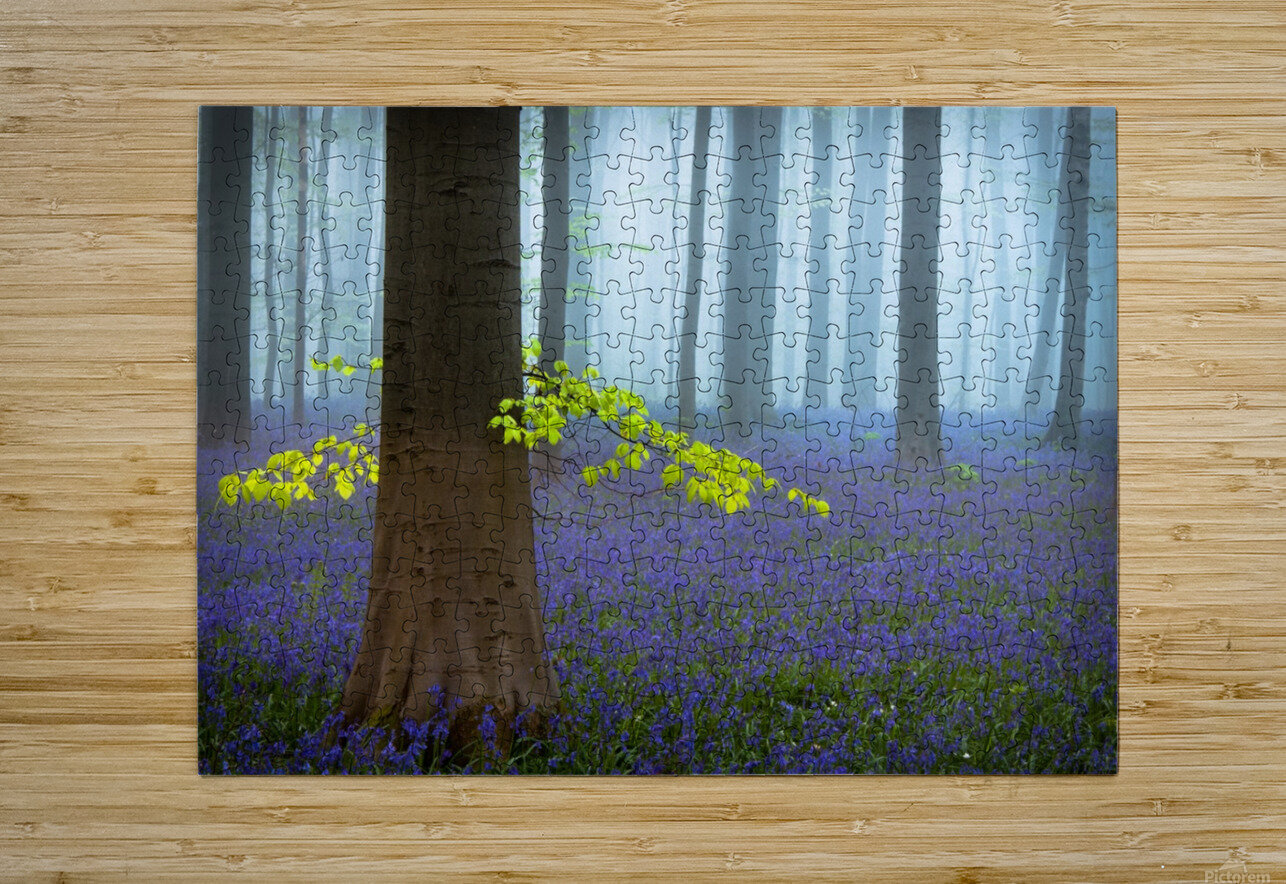Spring...........  HD Metal print with Floating Frame on Back