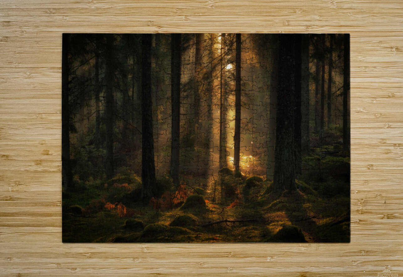 The light in the forest  HD Metal print with Floating Frame on Back