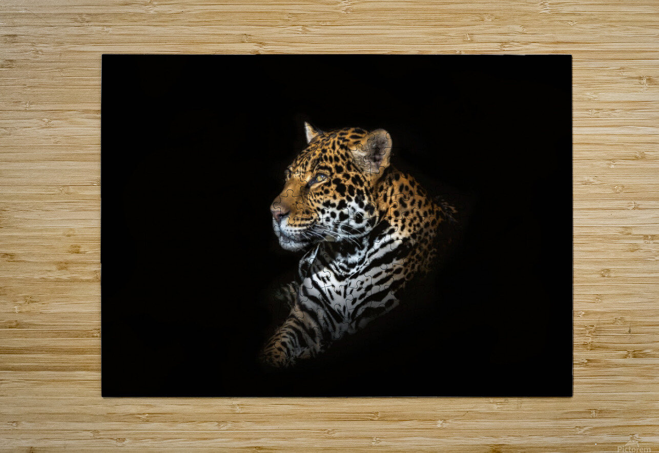 Jaguar Portrait  HD Metal print with Floating Frame on Back