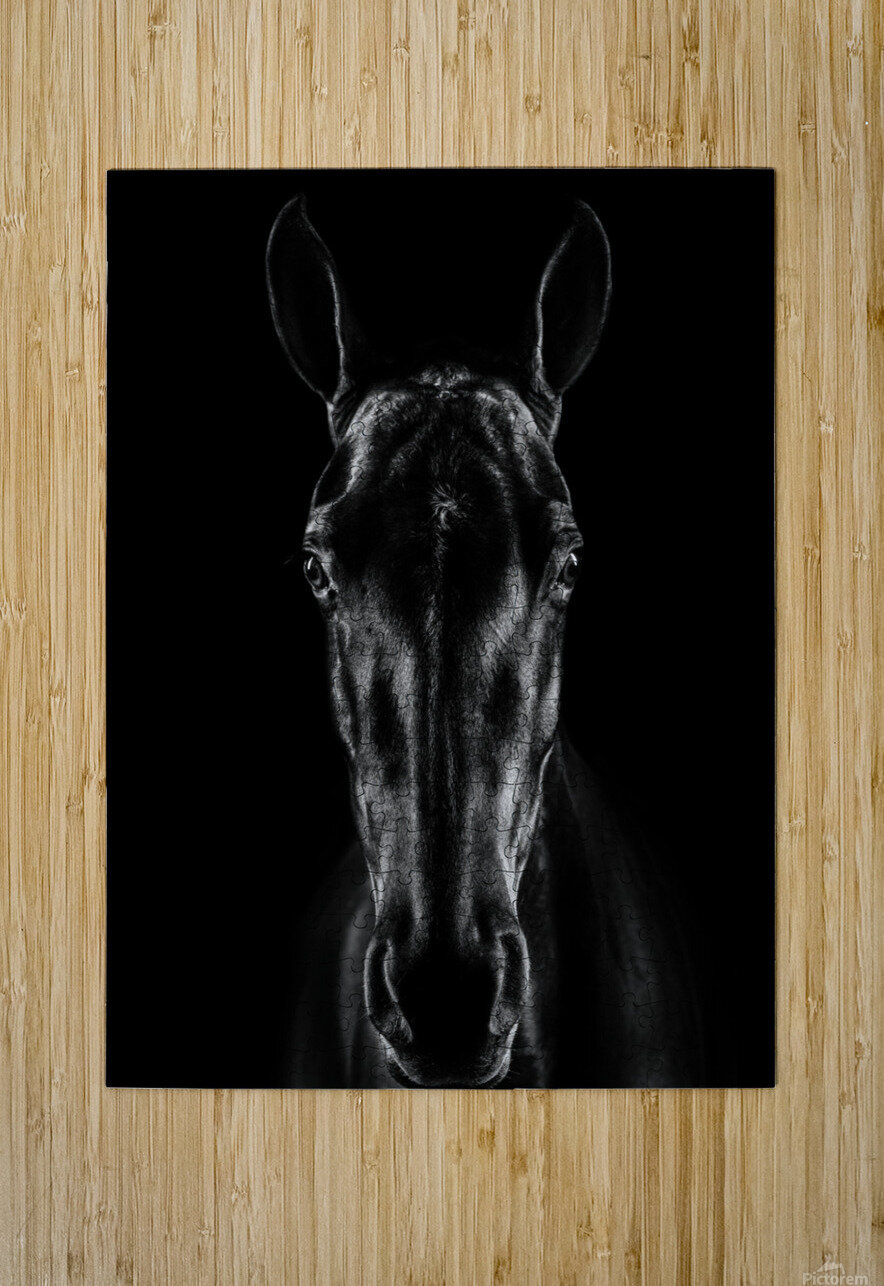 The Horse in Noir  HD Metal print with Floating Frame on Back
