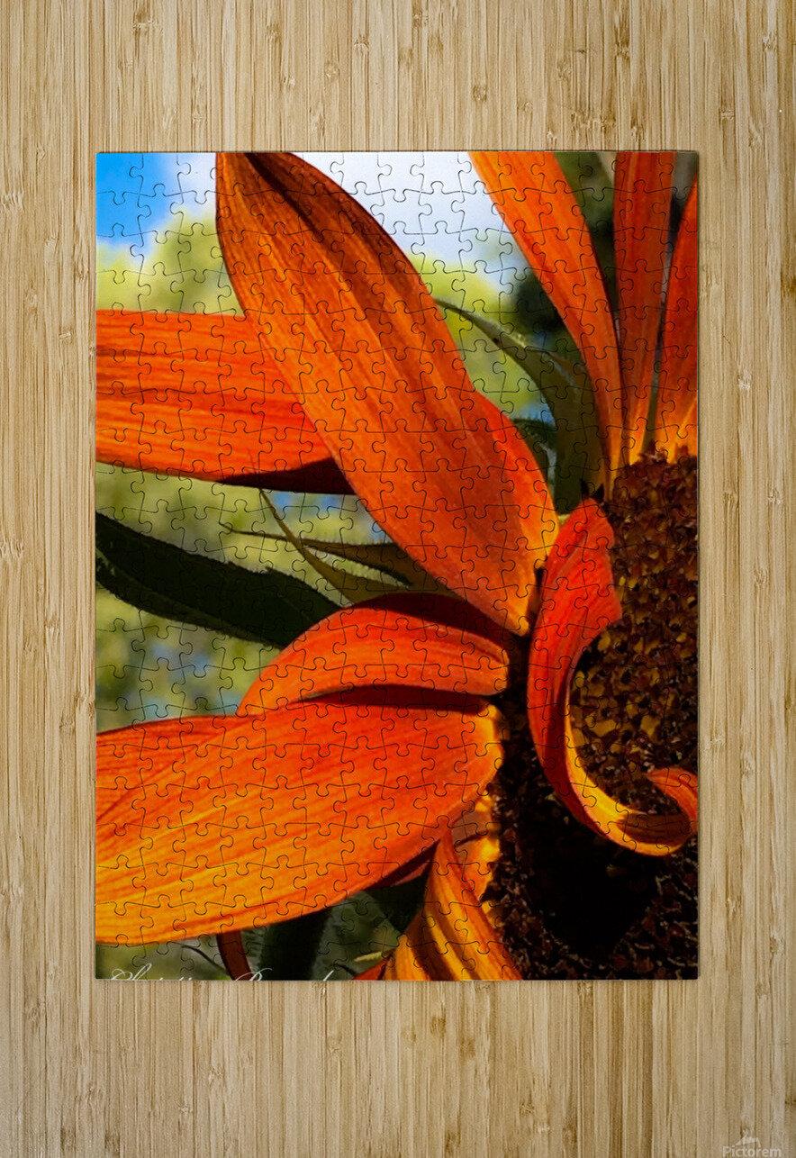 Sunflower   Impression métal HD avec cadre flottant sur le dos