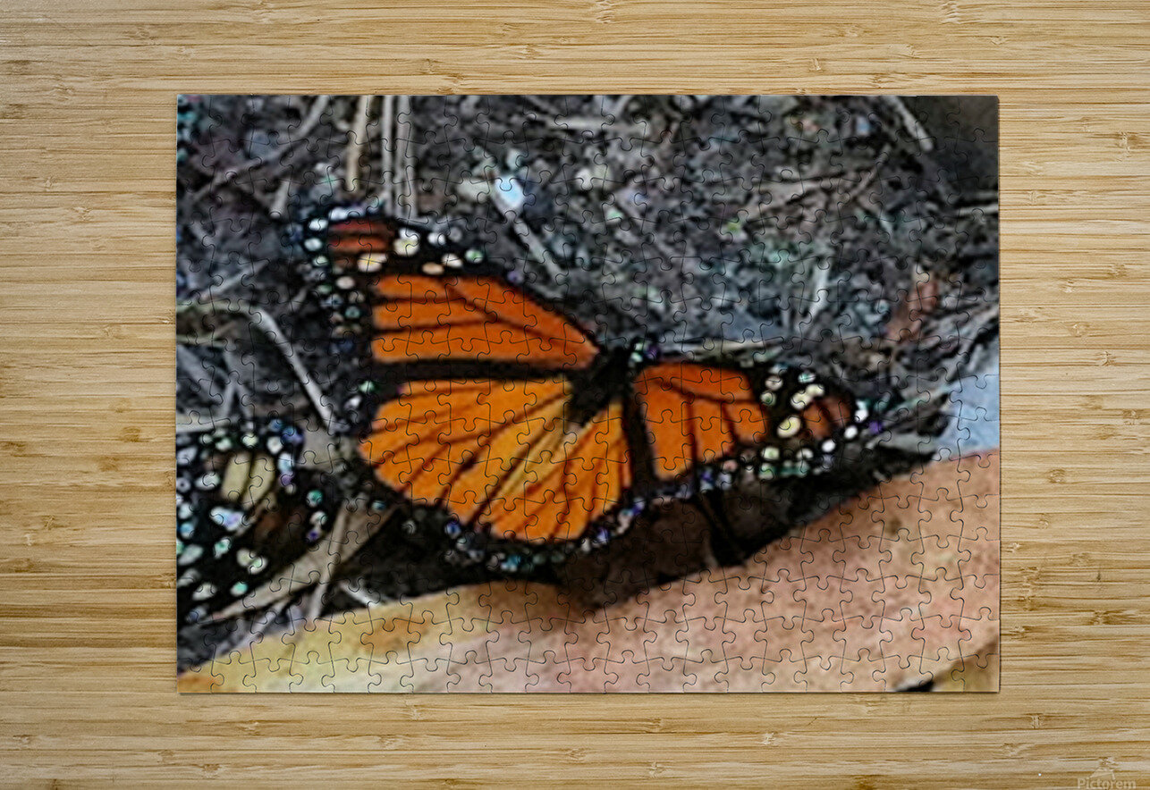Butterfly4  HD Metal print with Floating Frame on Back