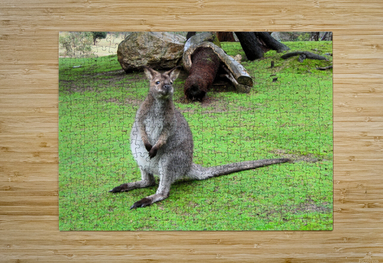 Animal16  HD Metal print with Floating Frame on Back