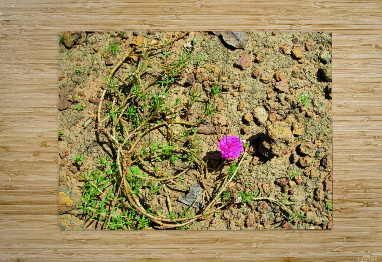Flower16  HD Metal print with Floating Frame on Back