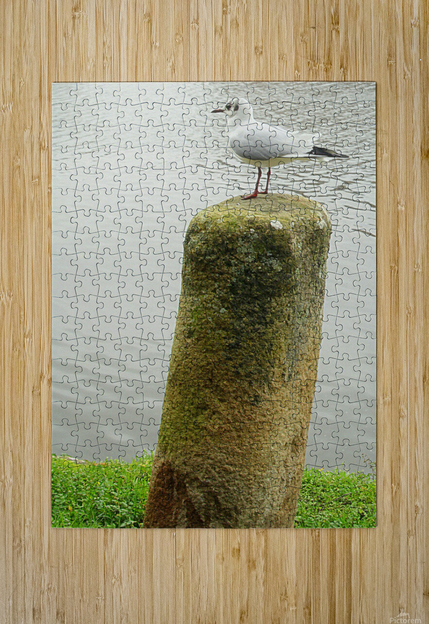 Mouette  HD Metal print with Floating Frame on Back