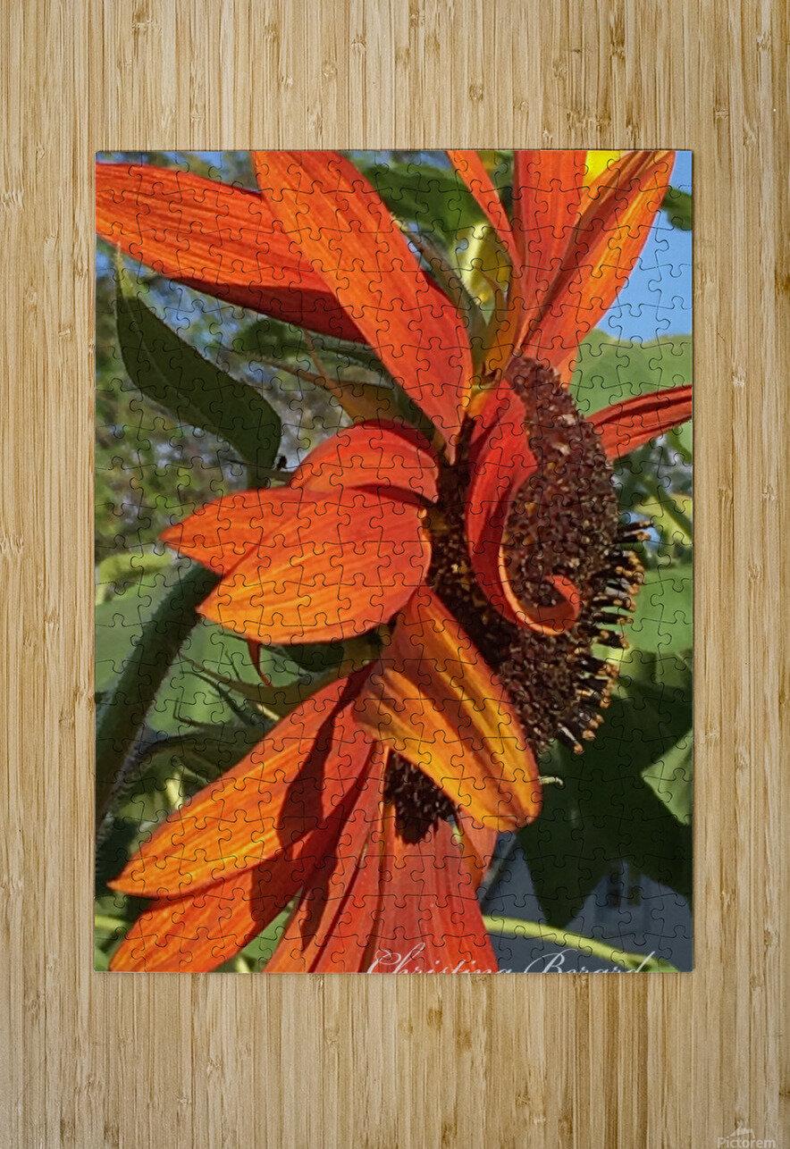 Sunflower seeds   Impression métal HD avec cadre flottant sur le dos