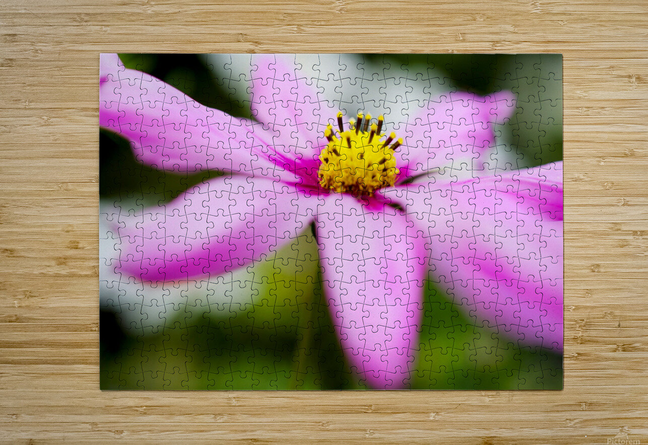 Pink and Flowing  HD Metal print with Floating Frame on Back