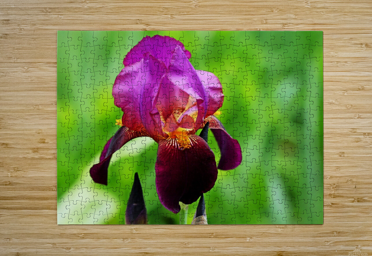 Bold And Beautiful  HD Metal print with Floating Frame on Back