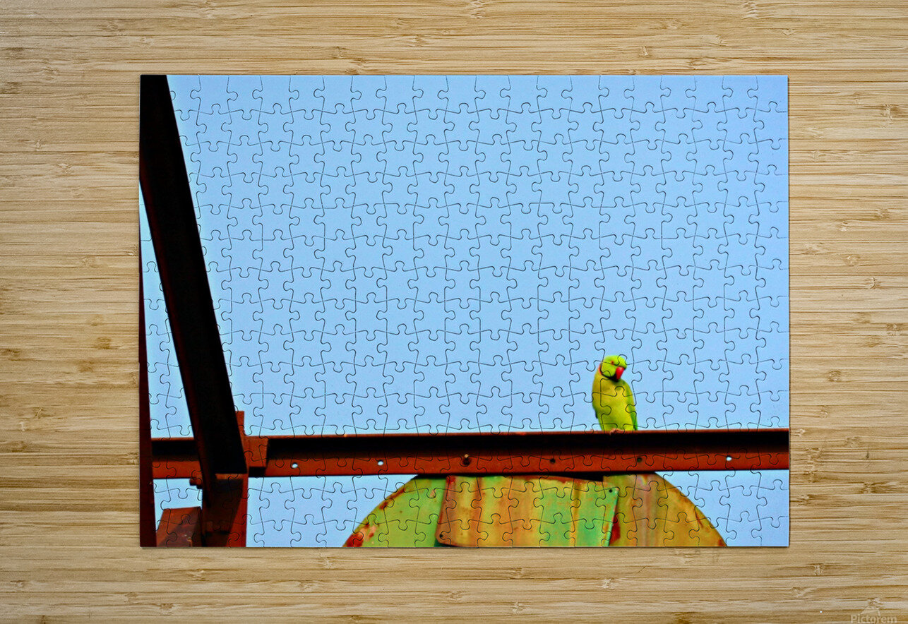 Bird 3  HD Metal print with Floating Frame on Back