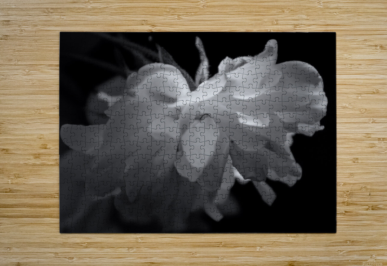 Tender  HD Metal print with Floating Frame on Back