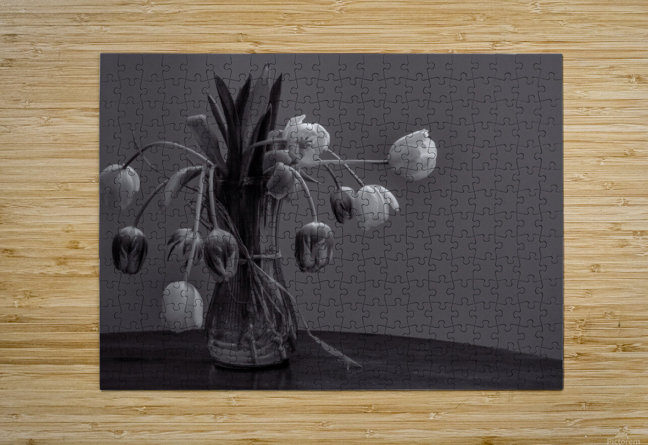Tired tulips  HD Metal print with Floating Frame on Back