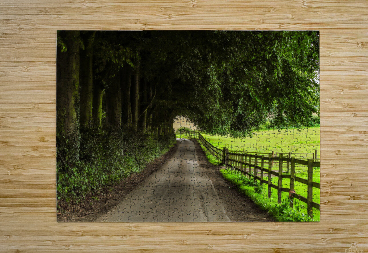 Beautiful Nature Landscape Tree Forest Trees Photography landscape photo Scenery  HD Metal print with Floating Frame on Back
