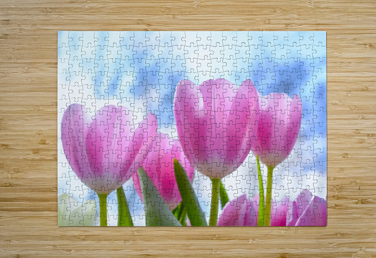 nature, tulip, flora, flower, summer, bright, petal, season, color, floral, growth, blooming, freshness,  HD Metal print with Floating Frame on Back