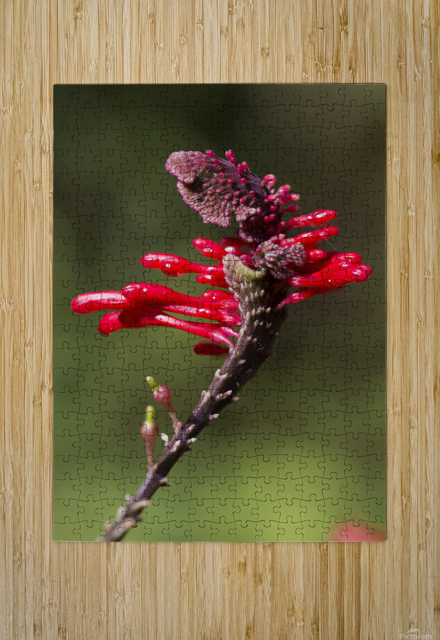Red Flower  HD Metal print with Floating Frame on Back