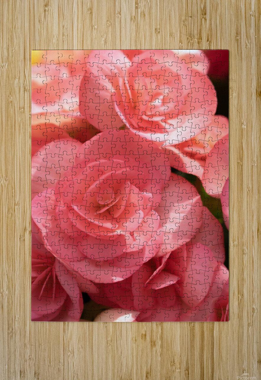 Pink pastel flower  HD Metal print with Floating Frame on Back