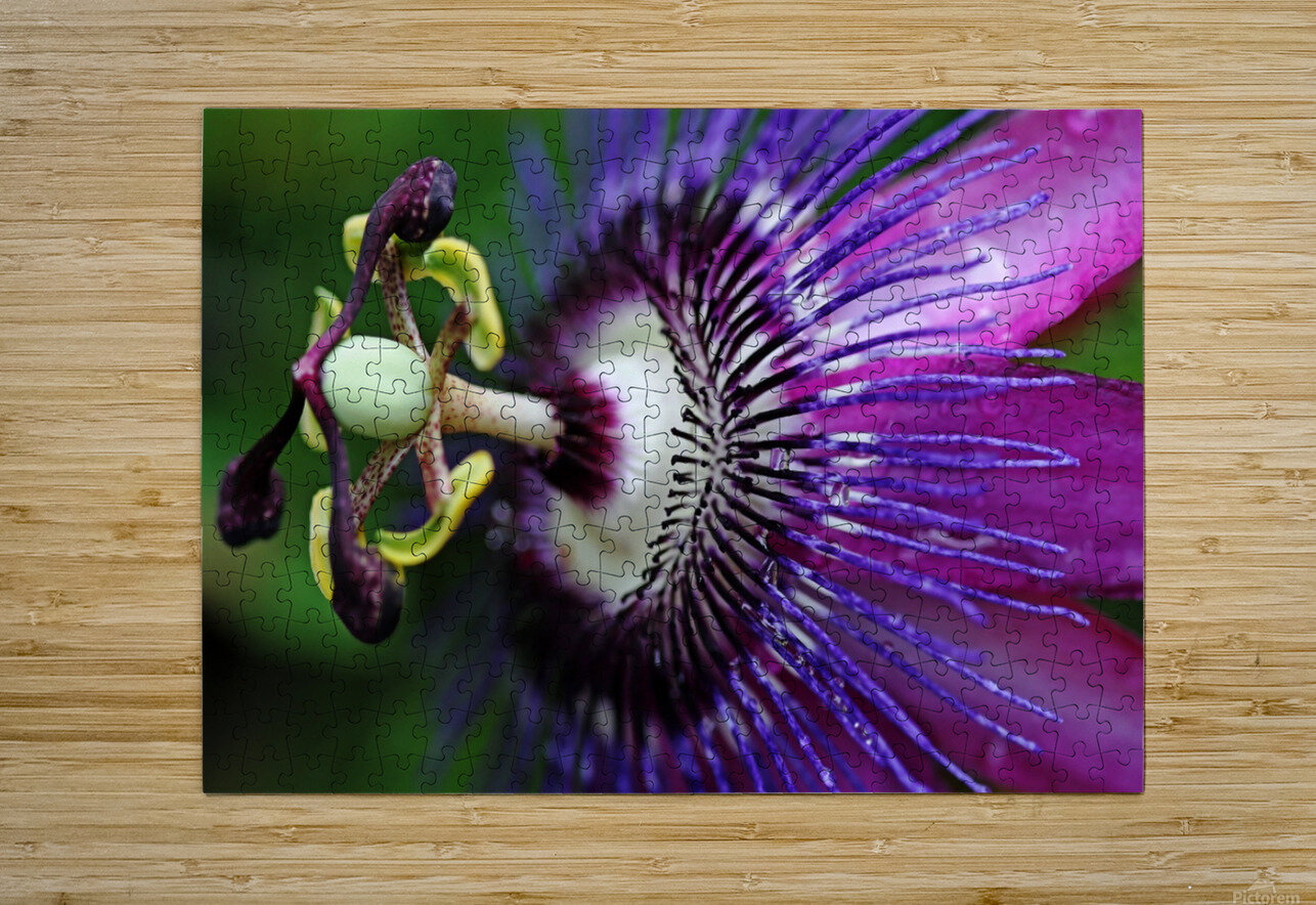 Passion Flower In Purple  HD Metal print with Floating Frame on Back
