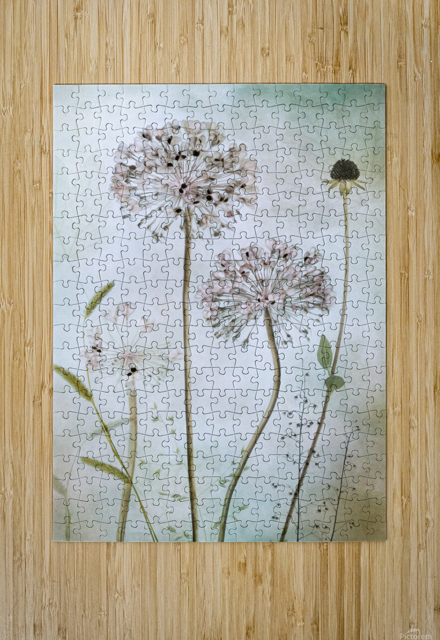 Allium  HD Metal print with Floating Frame on Back