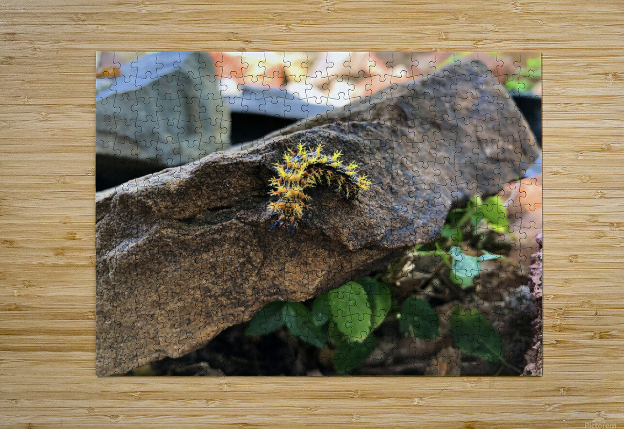 Caterpillar  HD Metal print with Floating Frame on Back