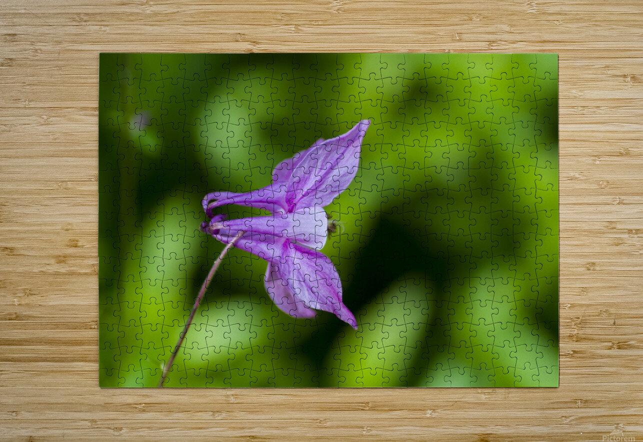 Purple Columbine 2  HD Metal print with Floating Frame on Back