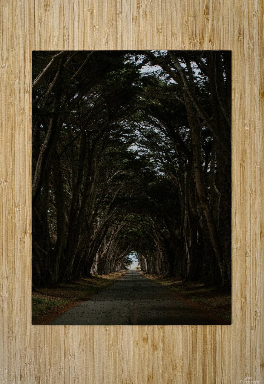 Cypress Tree Tunnel California  Impression métal HD avec cadre flottant sur le dos