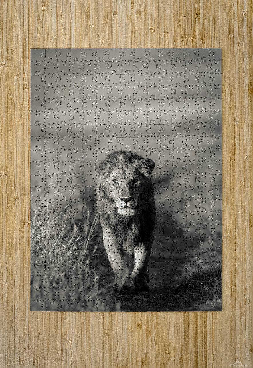 A Kings Marching  HD Metal print with Floating Frame on Back