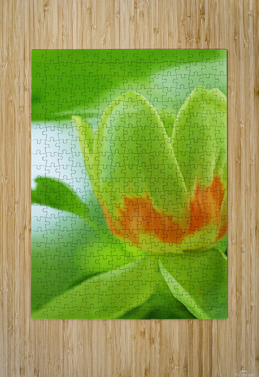 Yellow Poplar Flower  HD Metal print with Floating Frame on Back