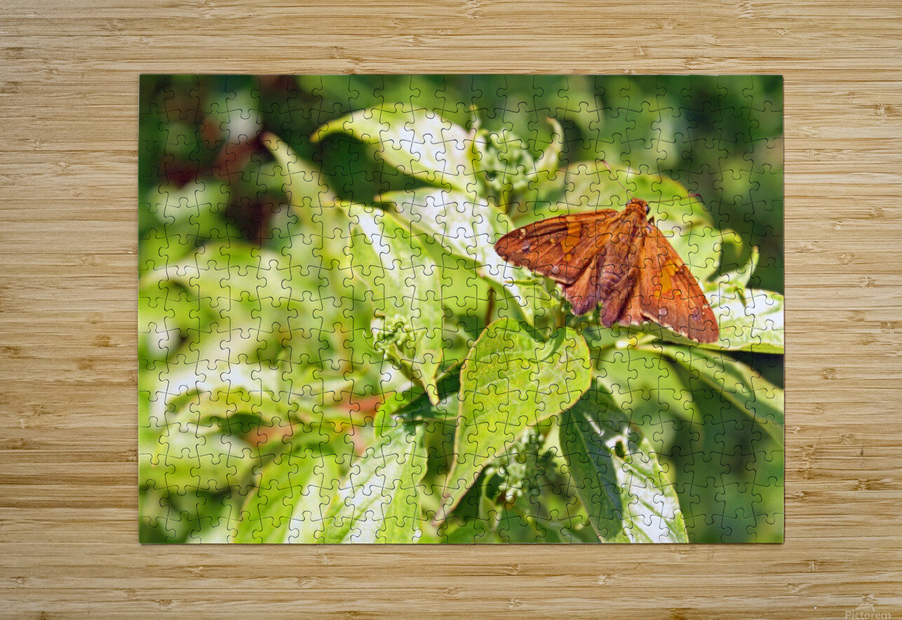 Taking a Break  HD Metal print with Floating Frame on Back