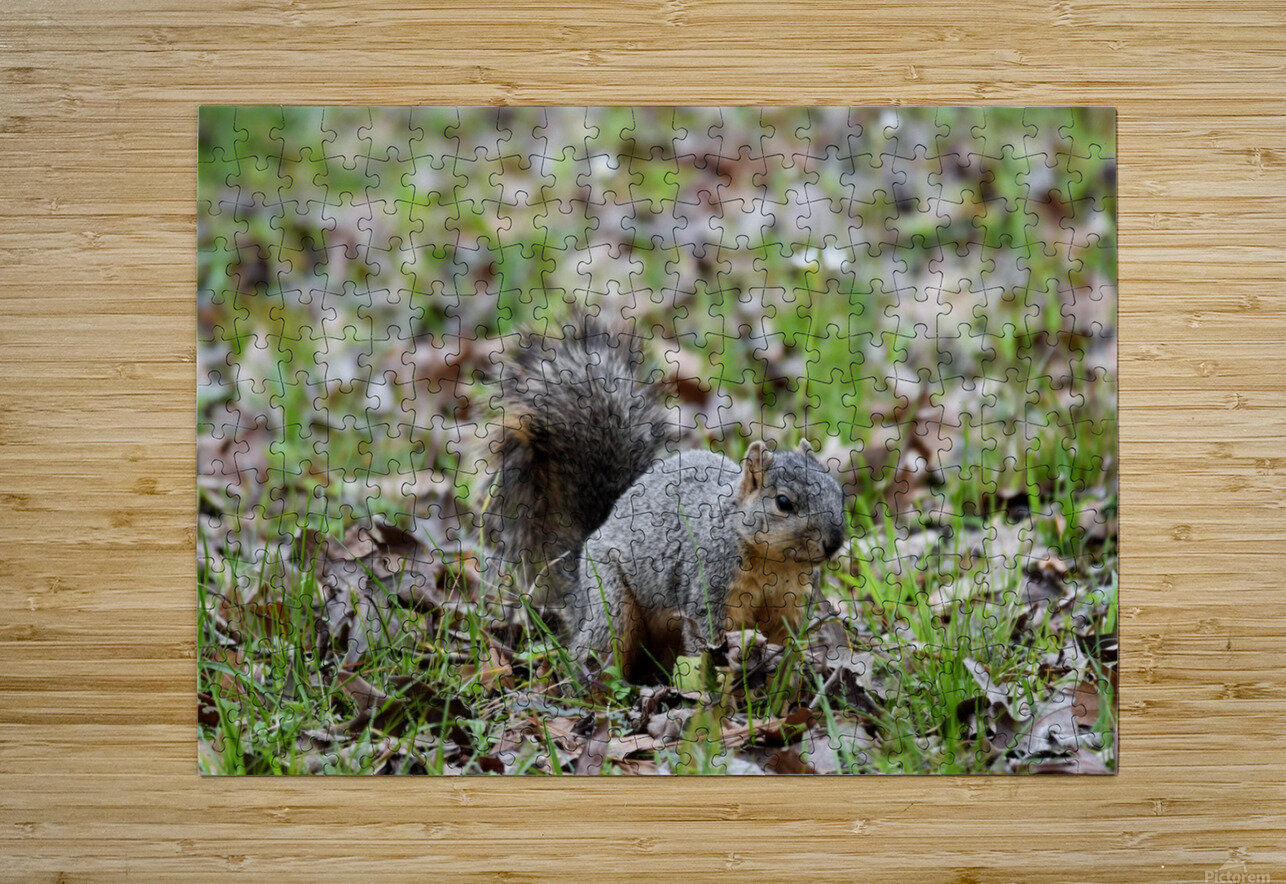 Squirrel 2  HD Metal print with Floating Frame on Back