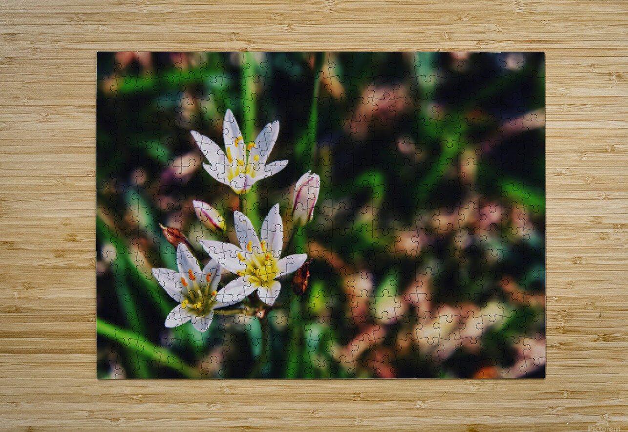 Flowers 2  HD Metal print with Floating Frame on Back