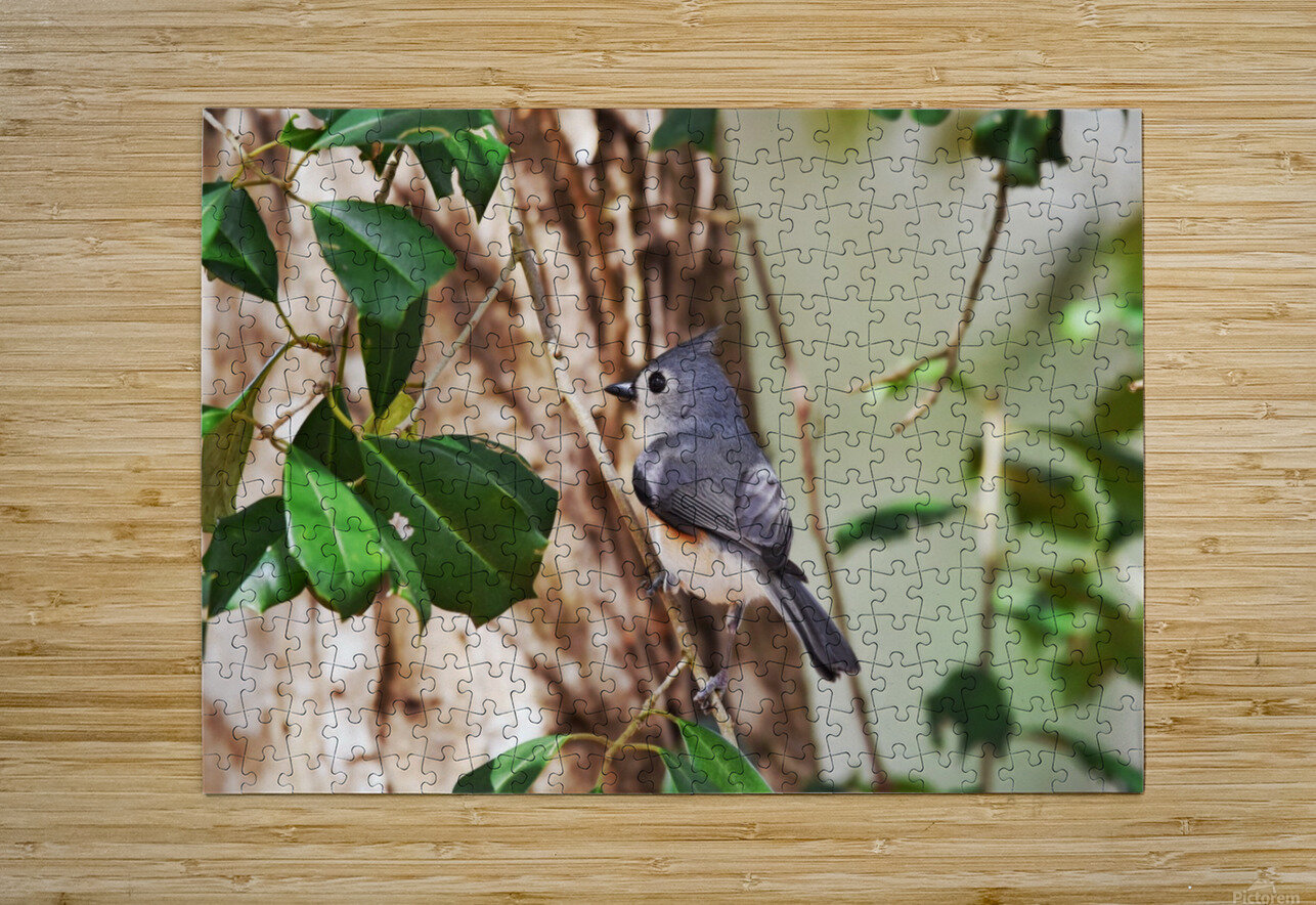 Tufted Titmouse  HD Metal print with Floating Frame on Back