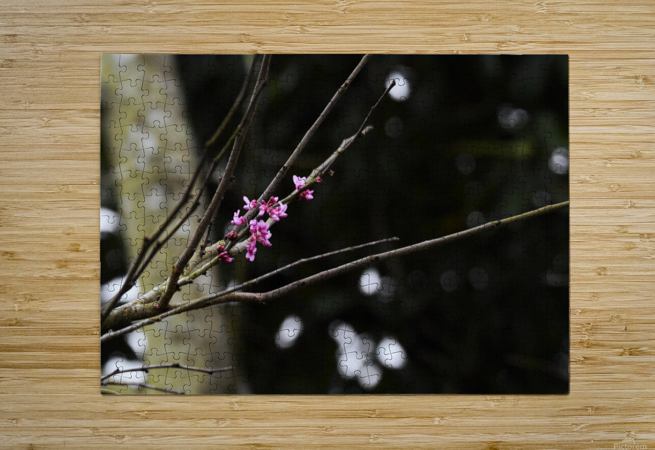 Pink Blossoms  HD Metal print with Floating Frame on Back