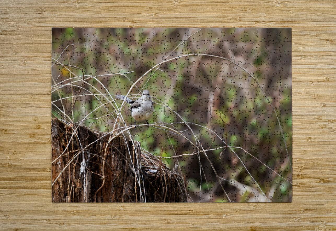 Angry Mockingbird 2  HD Metal print with Floating Frame on Back