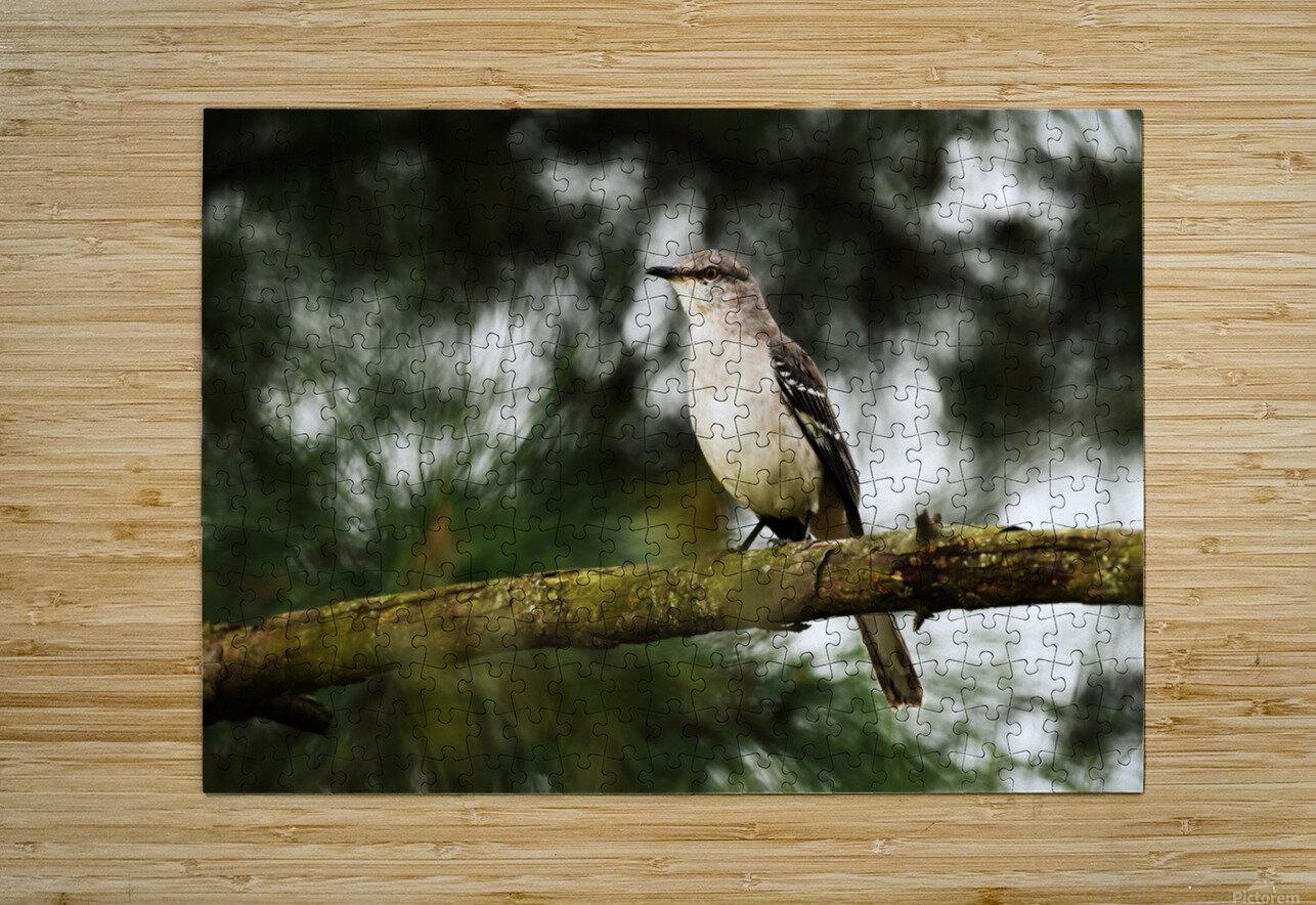 Mockingbird  HD Metal print with Floating Frame on Back