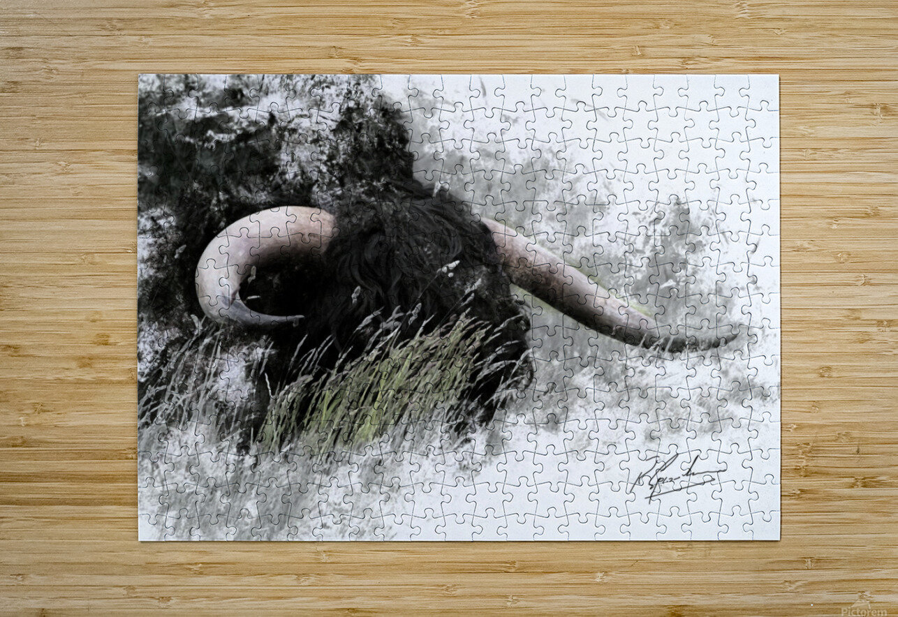 Bull in long grass  HD Metal print with Floating Frame on Back