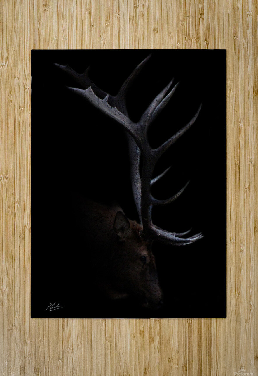 Elk in Black  HD Metal print with Floating Frame on Back