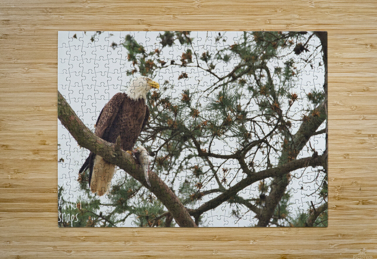Eagles in Houston  HD Metal print with Floating Frame on Back