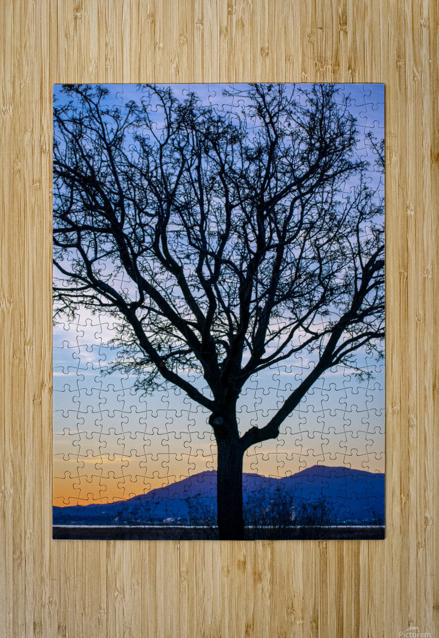 20190101 DSC_0107  HD Metal print with Floating Frame on Back