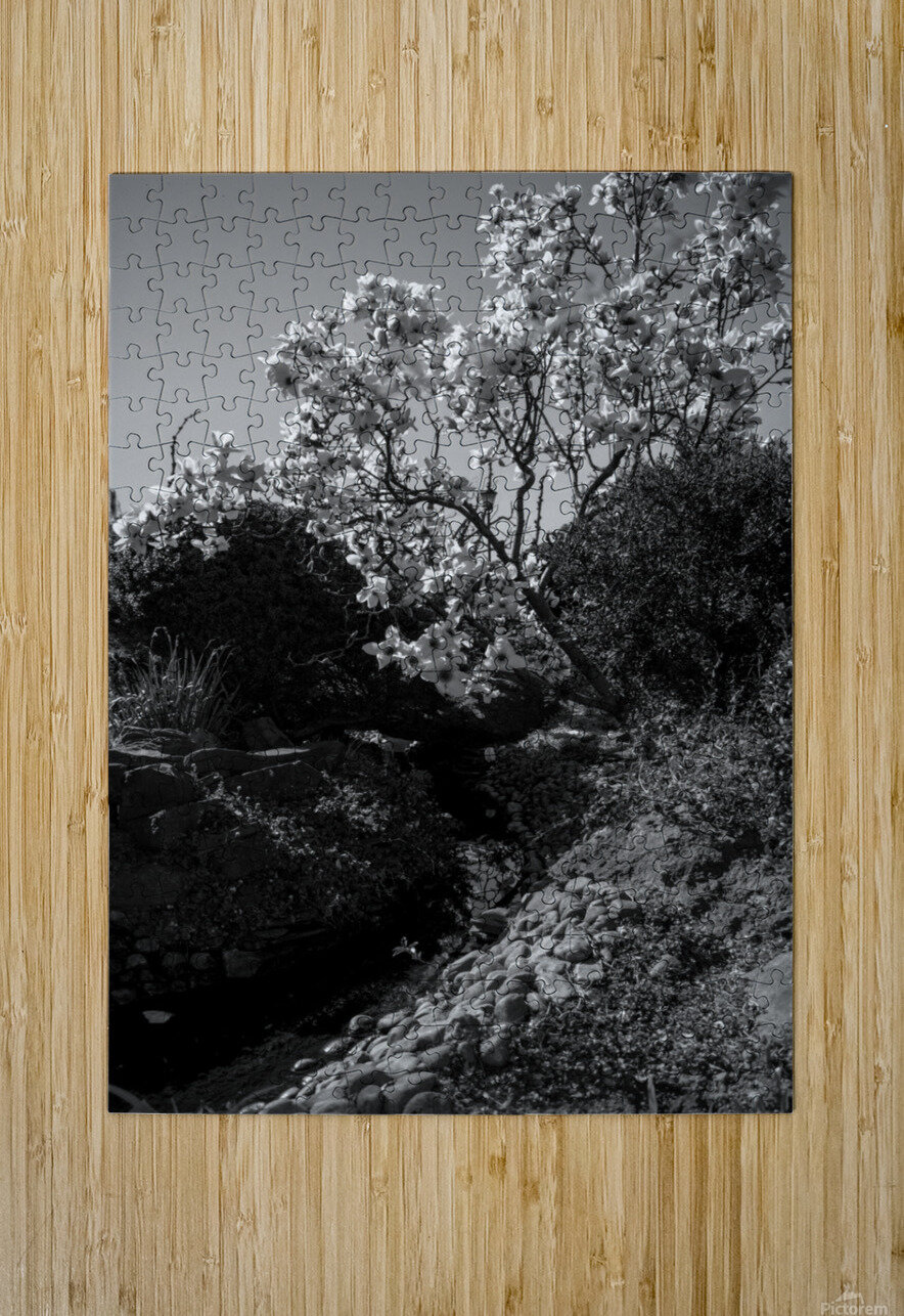 20190316 DSC_0136 2  HD Metal print with Floating Frame on Back
