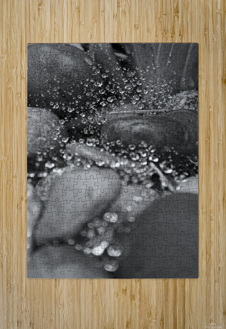 Spiderweb Raindrops B&W  HD Metal print with Floating Frame on Back