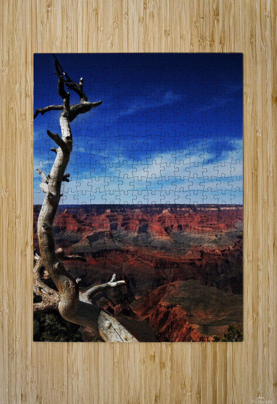 Grand Canyon framed by tree  HD Metal print with Floating Frame on Back