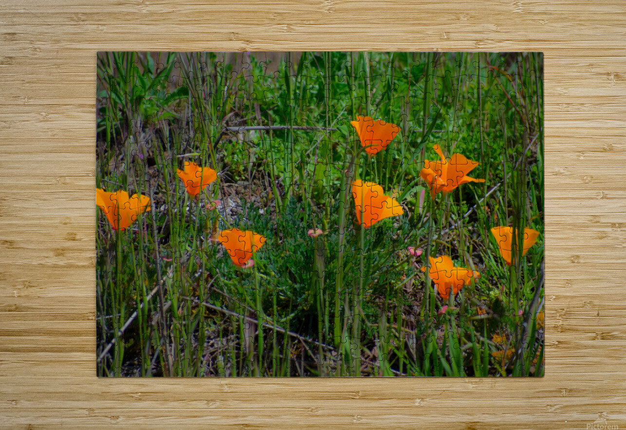 20190331 DSC_0762  HD Metal print with Floating Frame on Back