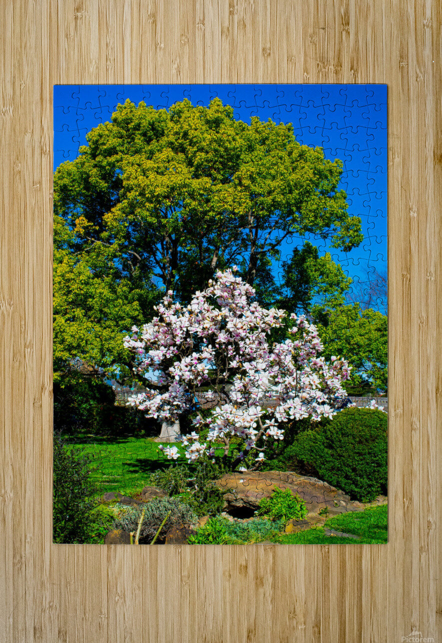 20190316 DSC_0146  HD Metal print with Floating Frame on Back